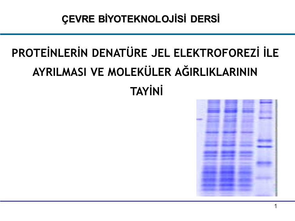 2   Proteinler, elektrik yükü, büyüklük, şekil gibi özelliklerine göre ayrılırlar.