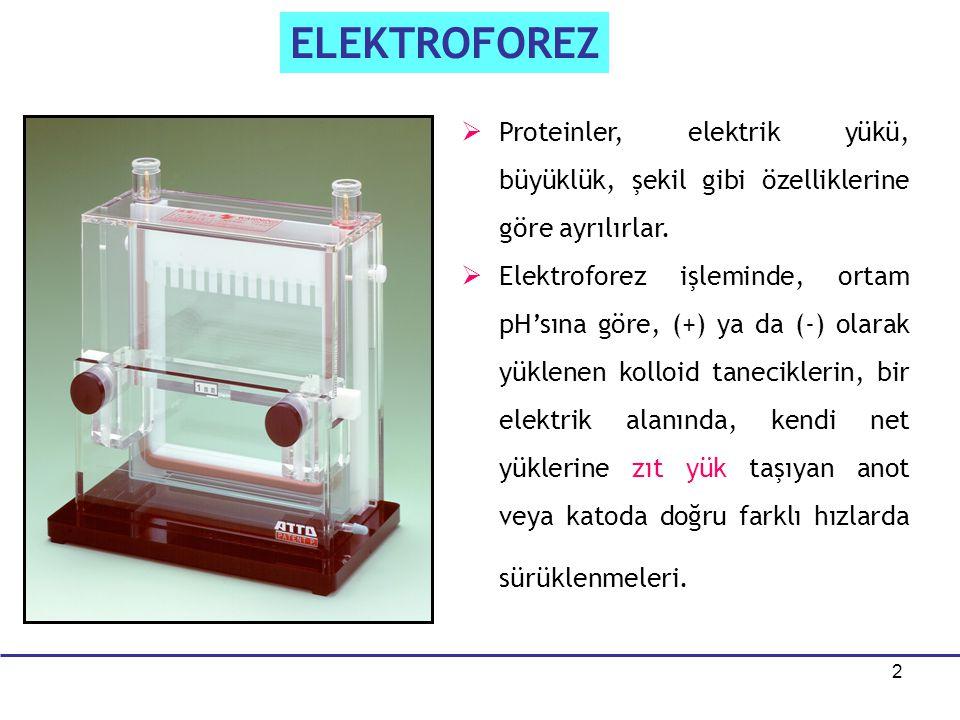 2   Proteinler, elektrik yükü, büyüklük, şekil gibi özelliklerine göre ayrılırlar.   Elektroforez işleminde, ortam pH'sına göre, (+) ya da (-) ola