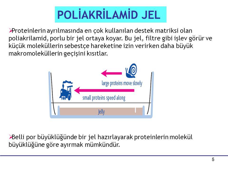 5 POLİAKRİLAMİD JEL   Proteinlerin ayrılmasında en çok kullanılan destek matriksi olan poliakrilamid, porlu bir jel ortaya koyar. Bu jel, filtre gib