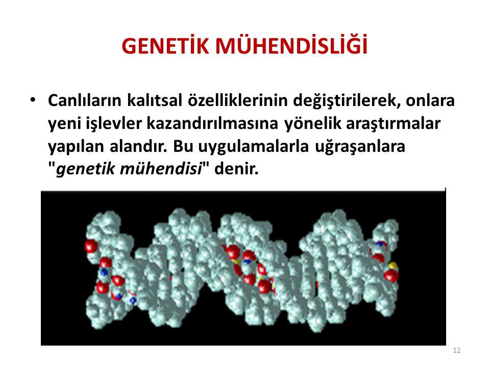 GENETİK MÜHENDİSLİĞİ Canlıların kalıtsal özelliklerinin değiştirilerek, onlara yeni işlevler kazandırılmasına yönelik araştırmalar yapılan alandır. Bu