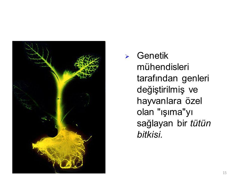  Genetik mühendisleri tarafından genleri değiştirilmiş ve hayvanlara özel olan