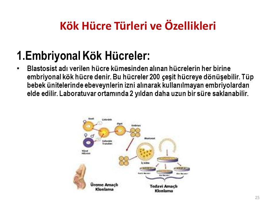 Kök Hücre Türleri ve Özellikleri 1.Embriyonal K ö k H ü creler: Blastosist adı verilen h ü cre k ü mesinden alınan h ü crelerin her birine embriyonal