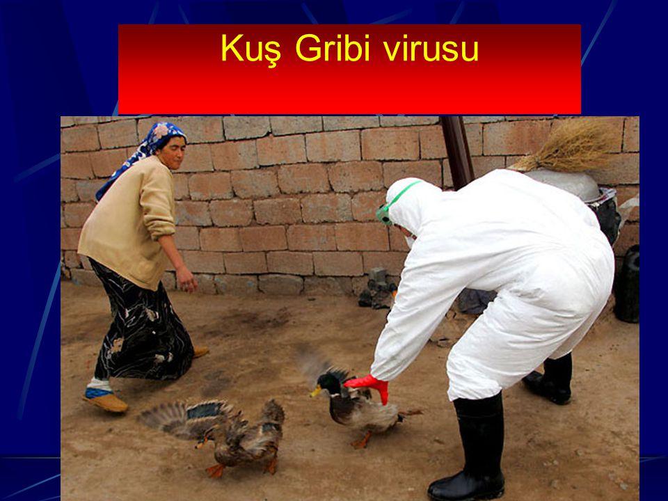 Kuş Gribi virusu Virus ilk olarak 1878 yılında izole edilmiştir. 1997 yılından bu yana değişik ülkelerde özellikle kanatlı hayvanlarda salgınlar oluşt