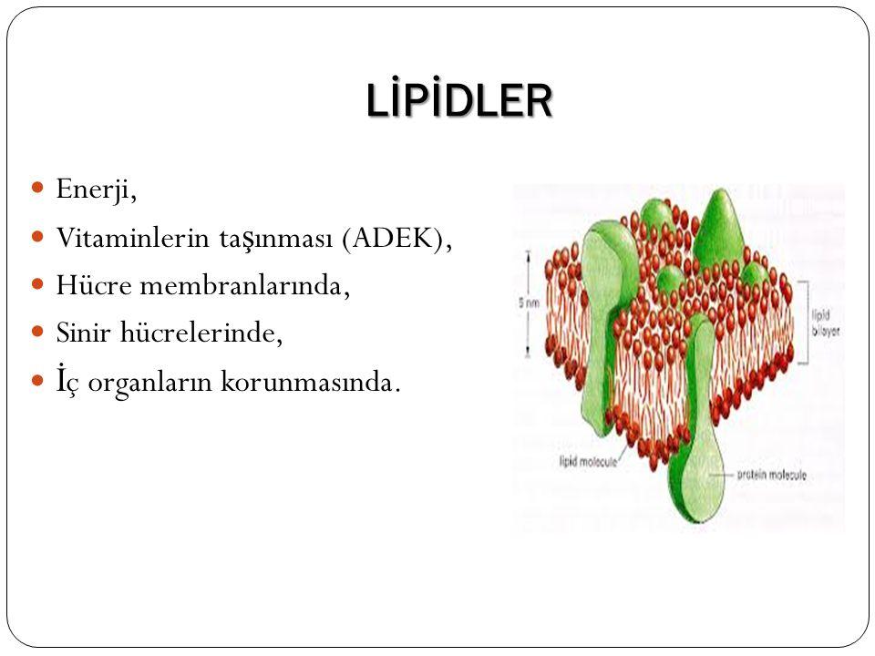 LİPİDLER Enerji, Vitaminlerin ta ş ınması (ADEK), Hücre membranlarında, Sinir hücrelerinde, İ ç organların korunmasında.