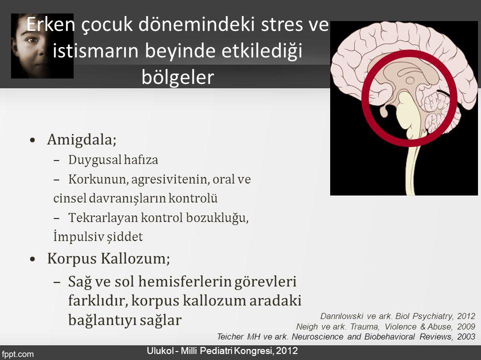 Amigdala; –Duygusal hafıza –Korkunun, agresivitenin, oral ve cinsel davranışların kontrolü –Tekrarlayan kontrol bozukluğu, İmpulsiv şiddet Korpus Kall