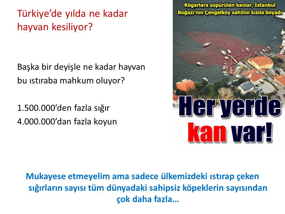 Türkiye'de yılda ne kadar hayvan kesiliyor? Başka bir deyişle ne kadar hayvan bu ıstıraba mahkum oluyor? 1.500.000'den fazla sığır 4.000.000'dan fazla