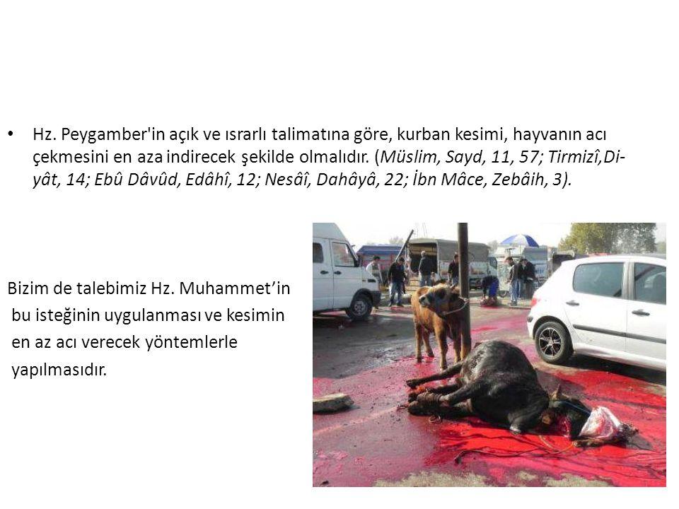 Hz. Peygamber'in açık ve ısrarlı talimatına göre, kurban kesimi, hayvanın acı çekmesini en aza indirecek şekilde olmalıdır. (Müslim, Sayd, 11, 57; Tir