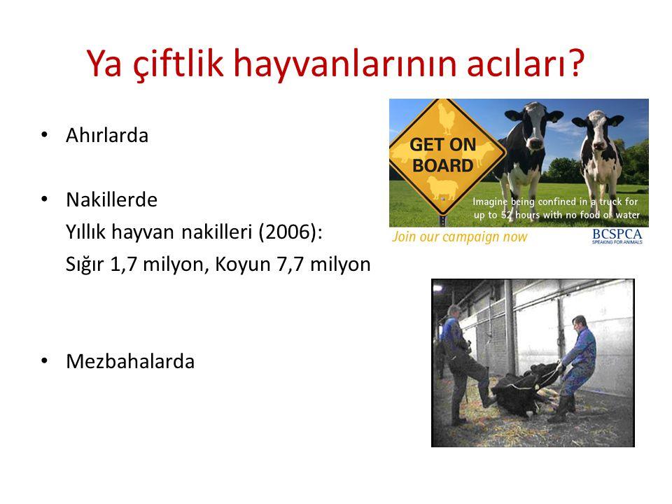 Ya çiftlik hayvanlarının acıları? Ahırlarda Nakillerde Yıllık hayvan nakilleri (2006): Sığır 1,7 milyon, Koyun 7,7 milyon Mezbahalarda