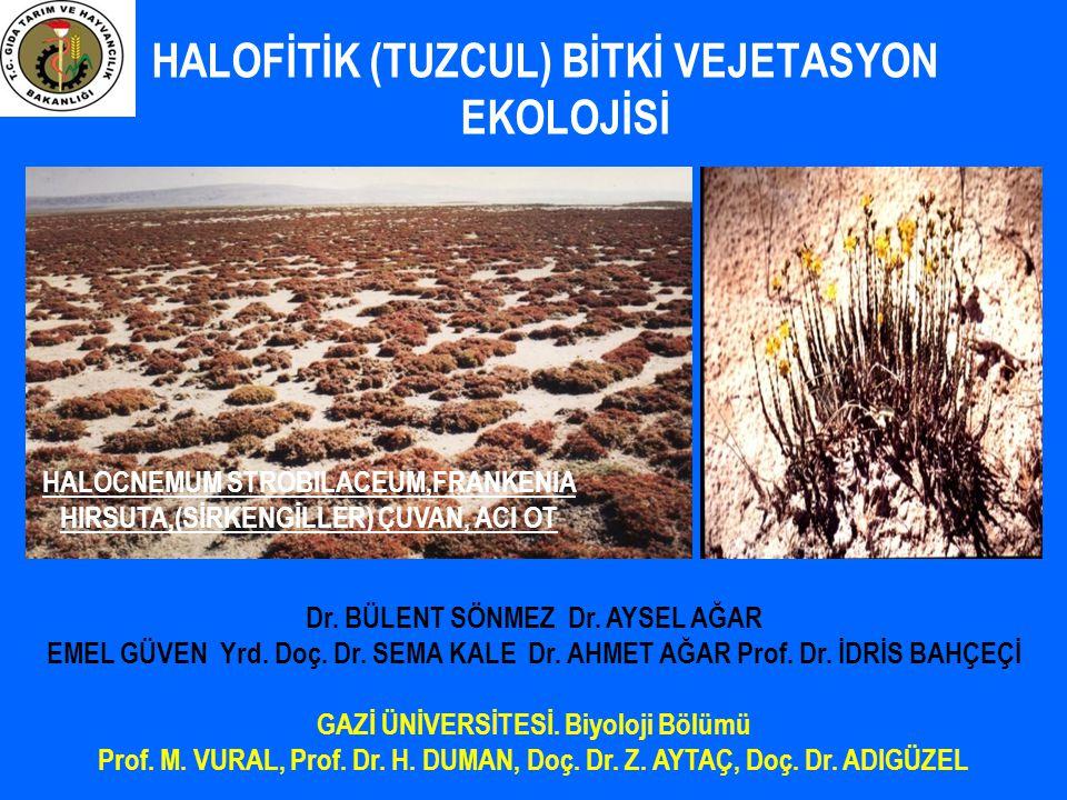 Kurak-yarı kurak bölgelerde sulanan alanların % 50'nde tuzluluk var Kaynak: Szabolcs 1991; Ghassemi ve ark.