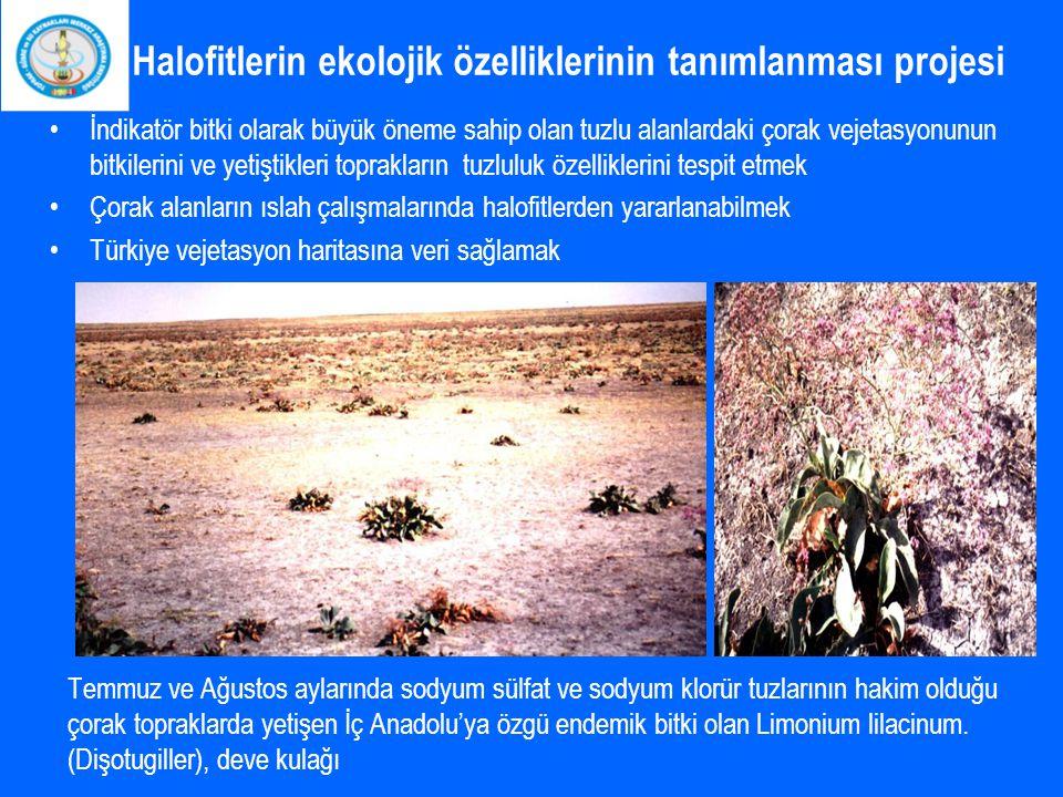 Halofitlerin ekolojik özelliklerinin tanımlanması projesi İndikatör bitki olarak büyük öneme sahip olan tuzlu alanlardaki çorak vejetasyonunun bitkile