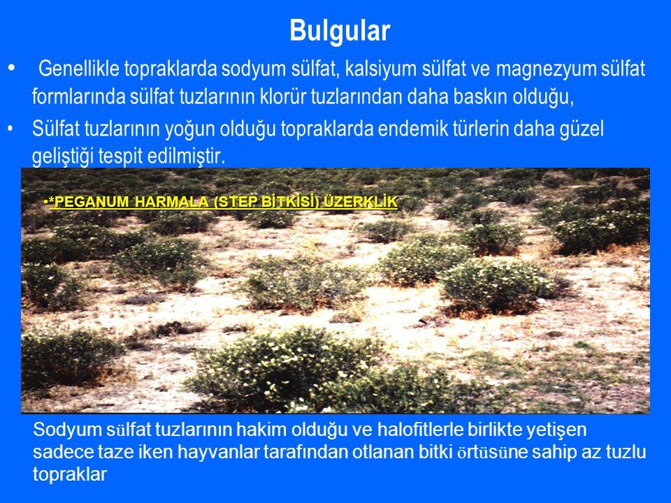 Bulgular *PEGANUM HARMALA (STEP BİTKİSİ) ÜZERKLİK*PEGANUM HARMALA (STEP BİTKİSİ) ÜZERKLİK Genellikle topraklarda sodyum sülfat, kalsiyum sülfat ve magnezyum sülfat formlarında sülfat tuzlarının klorür tuzlarından daha baskın olduğu, Sülfat tuzlarının yoğun olduğu topraklarda endemik türlerin daha güzel geliştiği tespit edilmiştir.