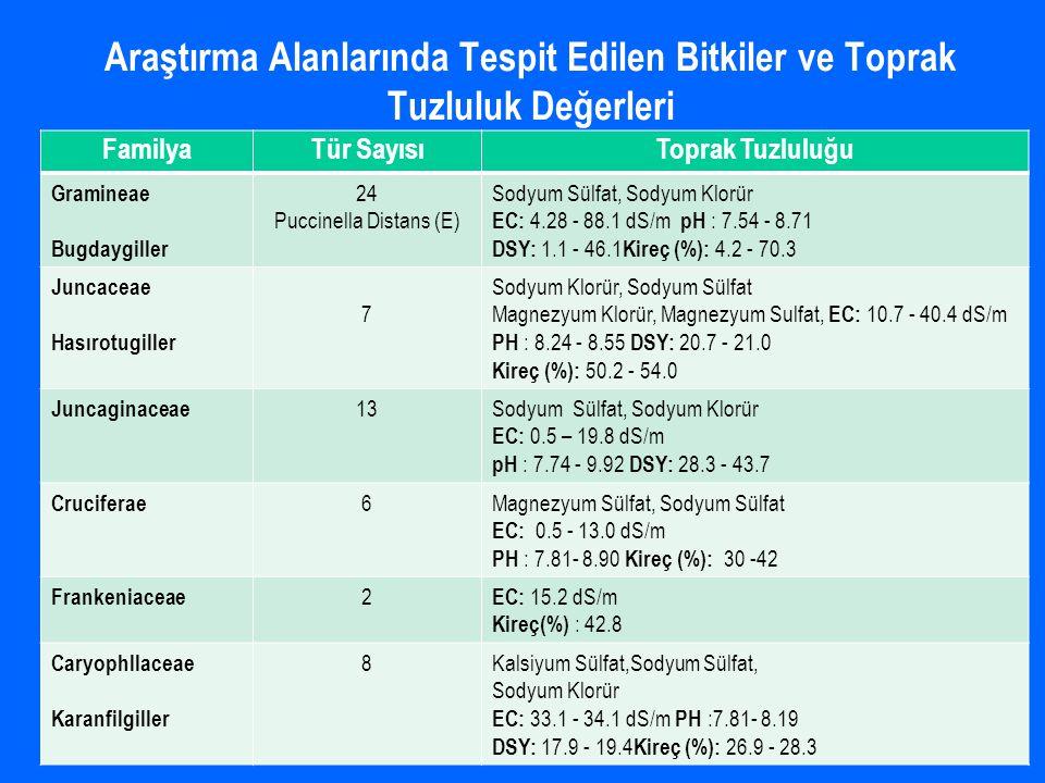 Araştırma Alanlarında Tespit Edilen Bitkiler ve Toprak Tuzluluk Değerleri FamilyaTür SayısıToprak Tuzluluğu Gramineae Bugdaygiller 24 Puccinella Distans (E) Sodyum Sülfat, Sodyum Klorür EC: 4.28 - 88.1 dS/m pH : 7.54 - 8.71 DSY: 1.1 - 46.1 Kireç (%): 4.2 - 70.3 Juncaceae Hasırotugiller 7 Sodyum Klorür, Sodyum Sülfat Magnezyum Klorür, Magnezyum Sulfat, EC: 10.7 - 40.4 dS/m PH : 8.24 - 8.55 DSY: 20.7 - 21.0 Kireç (%): 50.2 - 54.0 Juncaginaceae 13Sodyum Sülfat, Sodyum Klorür EC: 0.5 – 19.8 dS/m pH : 7.74 - 9.92 DSY: 28.3 - 43.7 Cruciferae 6Magnezyum Sülfat, Sodyum Sülfat EC: 0.5 - 13.0 dS/m PH : 7.81- 8.90 Kireç (%): 30 -42 Frankeniaceae 2 EC: 15.2 dS/m Kireç(%) : 42.8 Caryophllaceae Karanfilgiller 8Kalsiyum Sülfat,Sodyum Sülfat, Sodyum Klorür EC: 33.1 - 34.1 dS/m PH :7.81- 8.19 DSY: 17.9 - 19.4 Kireç (%): 26.9 - 28.3