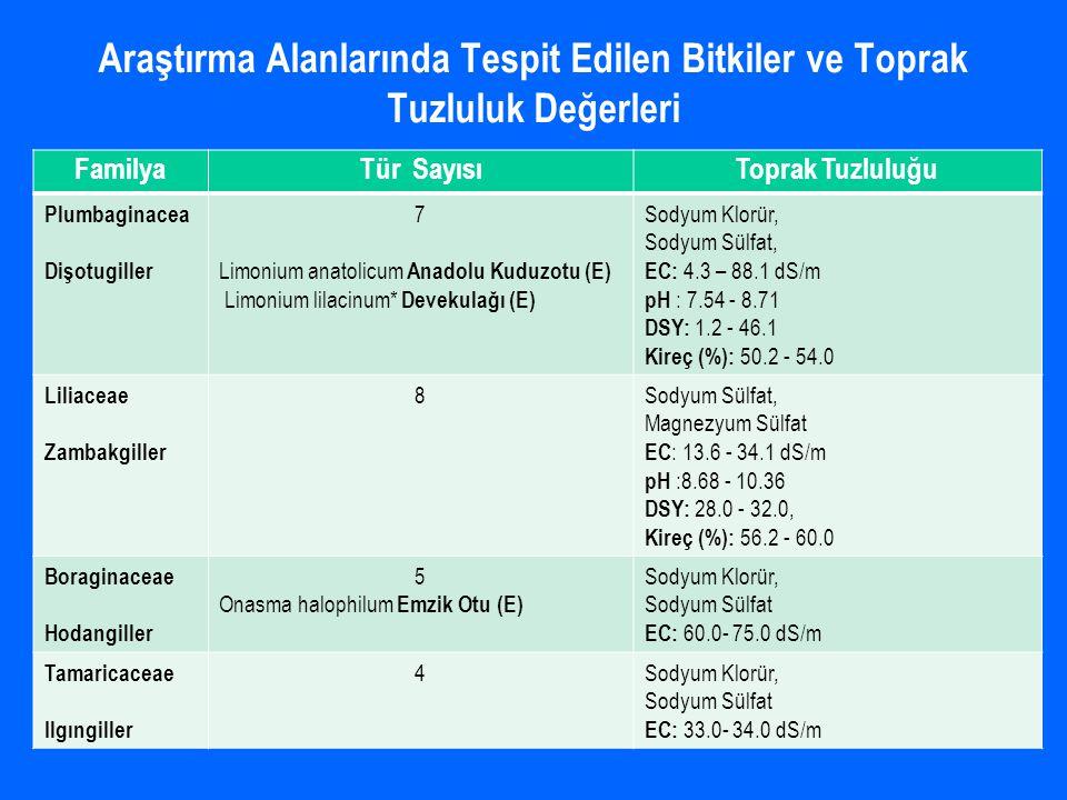 FamilyaTür SayısıToprak Tuzluluğu Plumbaginacea Dişotugiller 7 Limonium anatolicum Anadolu Kuduzotu (E) Limonium lilacinum* Devekulağı (E) Sodyum Klor