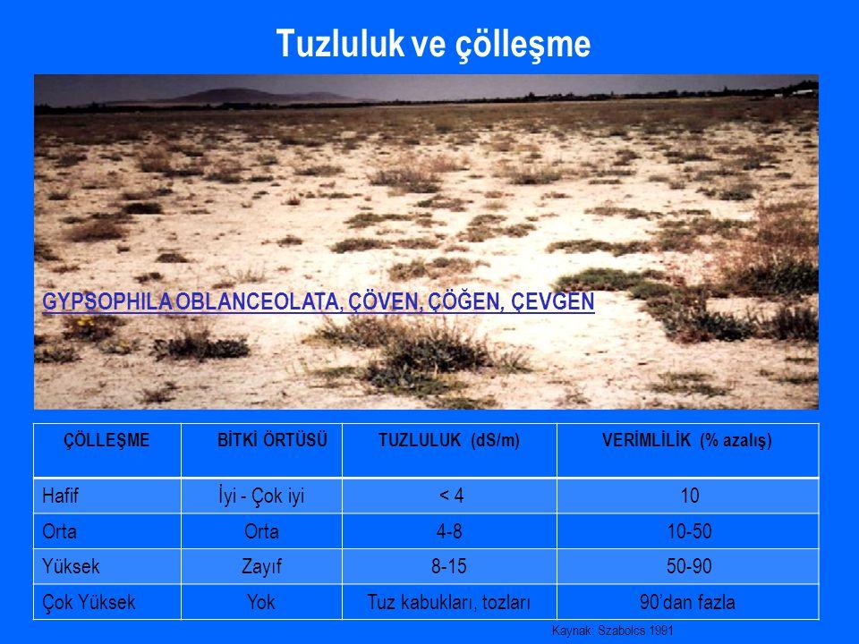 Halofitlerin ekolojik özelliklerinin tanımlanması projesi İndikatör bitki olarak büyük öneme sahip olan tuzlu alanlardaki çorak vejetasyonunun bitkilerini ve yetiştikleri toprakların tuzluluk özelliklerini tespit etmek Çorak alanların ıslah çalışmalarında halofitlerden yararlanabilmek Türkiye vejetasyon haritasına veri sağlamak Temmuz ve Ağustos aylarında sodyum sülfat ve sodyum klorür tuzlarının hakim olduğu çorak topraklarda yetişen İç Anadolu'ya özgü endemik bitki olan Limonium lilacinum.
