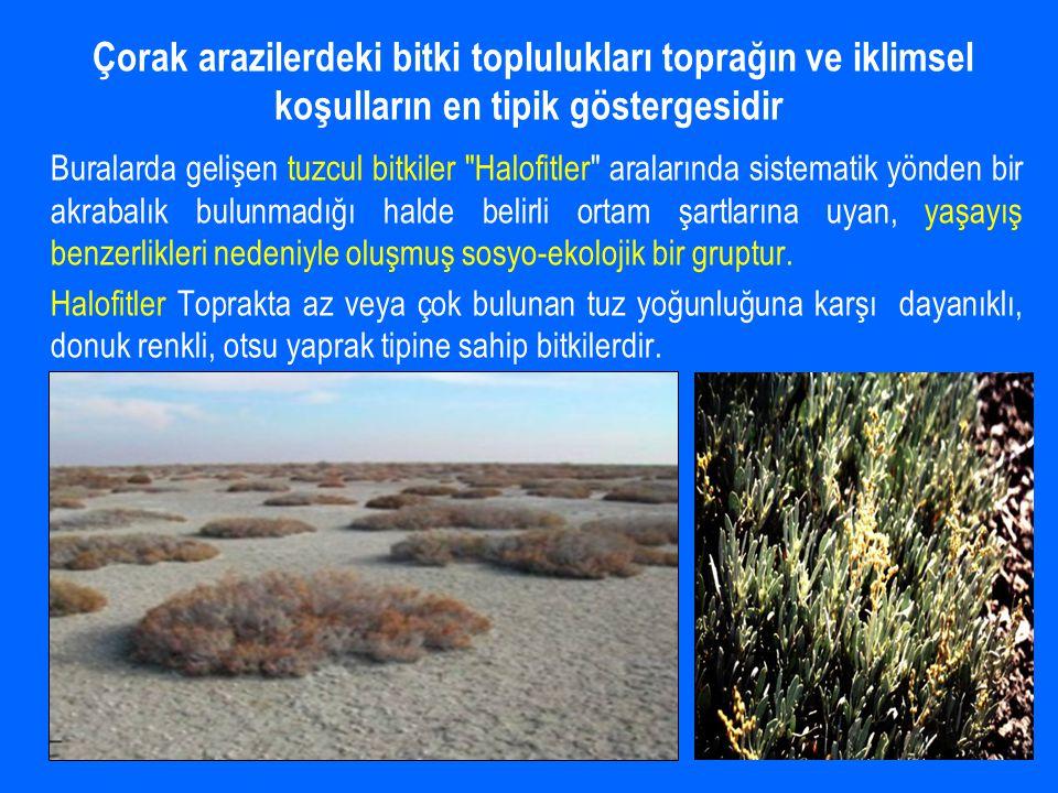 Buralarda gelişen tuzcul bitkiler Halofitler aralarında sistematik yönden bir akrabalık bulunmadığı halde belirli ortam şartlarına uyan, yaşayış benzerlikleri nedeniyle oluşmuş sosyo-ekolojik bir gruptur.