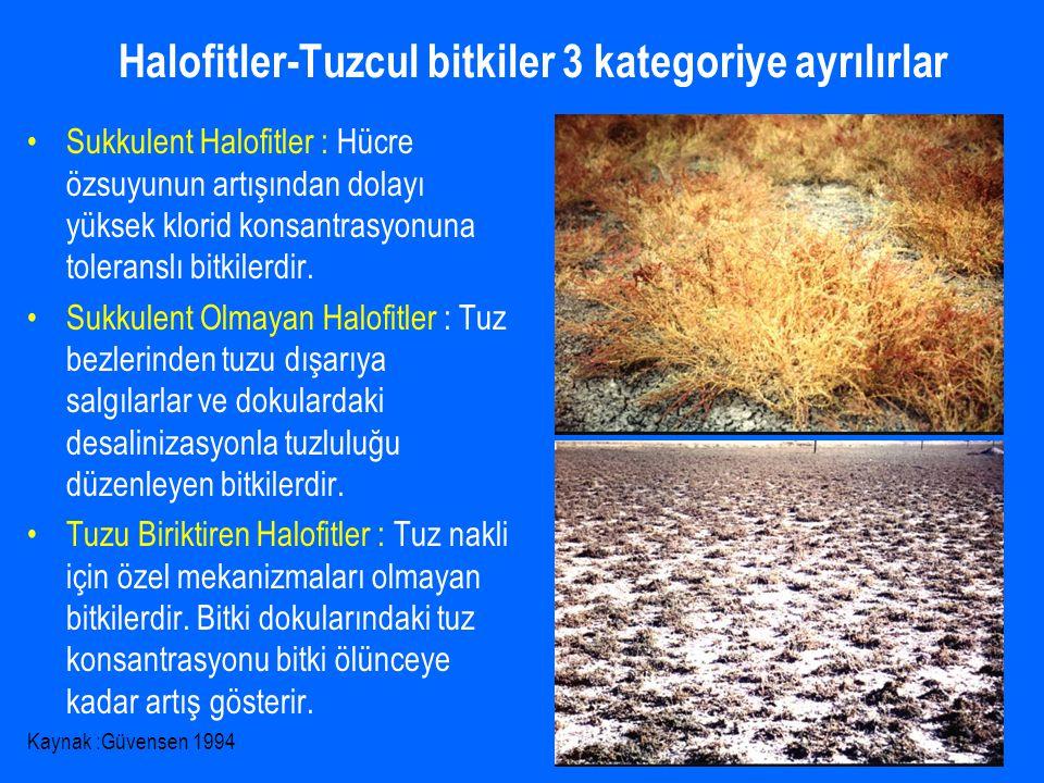 Halofitler-Tuzcul bitkiler 3 kategoriye ayrılırlar Sukkulent Halofitler : Hücre özsuyunun artışından dolayı yüksek klorid konsantrasyonuna toleranslı bitkilerdir.