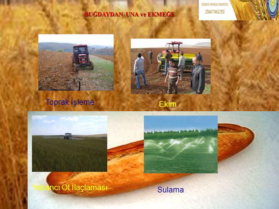 .. Toprak İşleme Ekim Yabancı Ot İlaçlaması Sulama BUĞDAYDAN UNA ve EKMEĞE