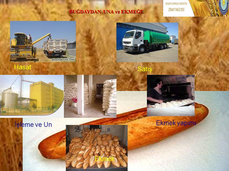 .. Hasat Satış İşleme ve Un Ekmek yapımı Ekmek BUĞDAYDAN UNA ve EKMEĞE