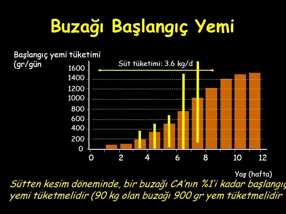 Buzağı Başlangıç Yemi 0 200 1000 400 Yaş (hafta) 2246810120 600 800 1200 1400 Başlangıç yemi tüketimi (gr/gün Süt tüketimi: 3.6 kg/d 1600 Sütten kesim