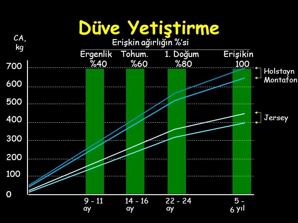 Düve Yetiştirme Erişikin 100 5 - 6 0 100 0 200 300 400 500 600 700 CA, kg yıl Tohum. %60 14 - 16 ay Ergenlik %40 Erişkin ağırlığın %'si 9 - 11 ay 1. D
