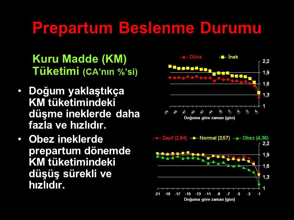Prepartum Beslenme Durumu Kuru Madde (KM) Tüketimi (CA'nın %'si) Doğum yaklaştıkça KM tüketimindeki düşme ineklerde daha fazla ve hızlıdır. Obez inekl