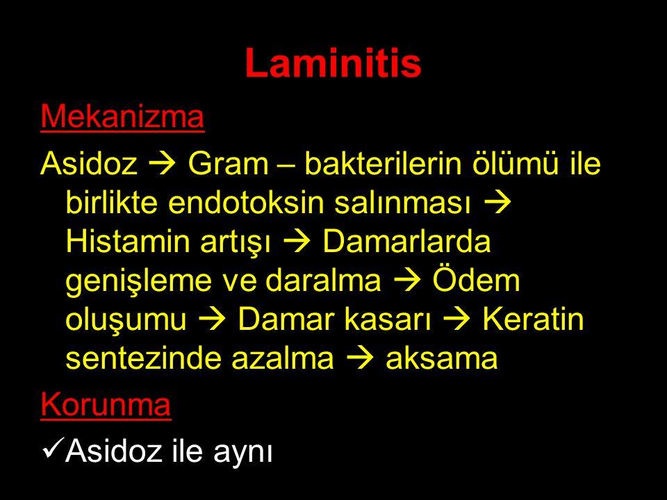 Laminitis Mekanizma Asidoz  Gram – bakterilerin ölümü ile birlikte endotoksin salınması  Histamin artışı  Damarlarda genişleme ve daralma  Ödem ol
