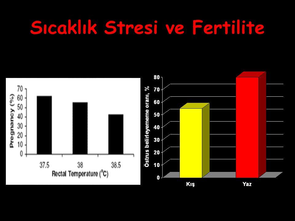 Sıcaklık Stresi ve Fertilite