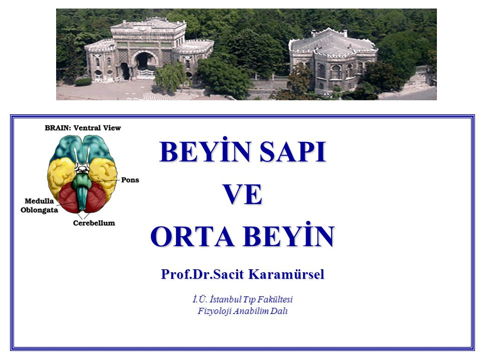 BEYİN SAPI VE ORTA BEYİN Prof.Dr.Sacit Karamürsel İ.Ü.