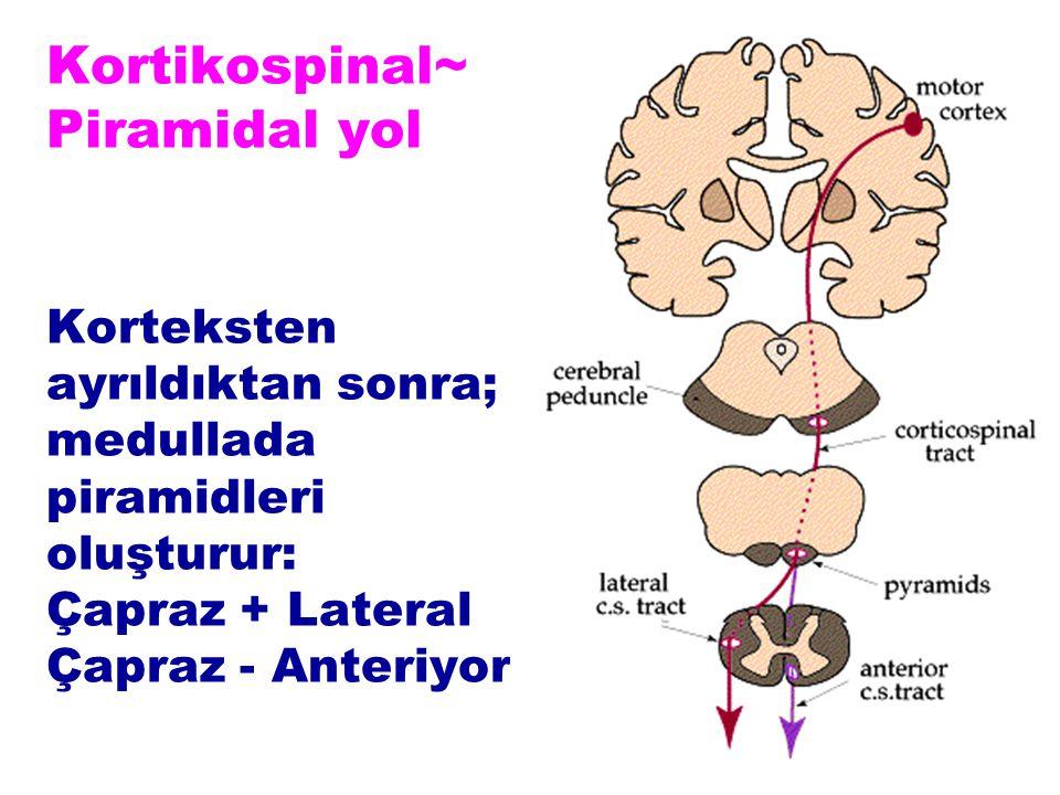 Kortikospinal~ Piramidal yol Korteksten ayrıldıktan sonra; medullada piramidleri oluşturur: Çapraz + Lateral Çapraz - Anteriyor