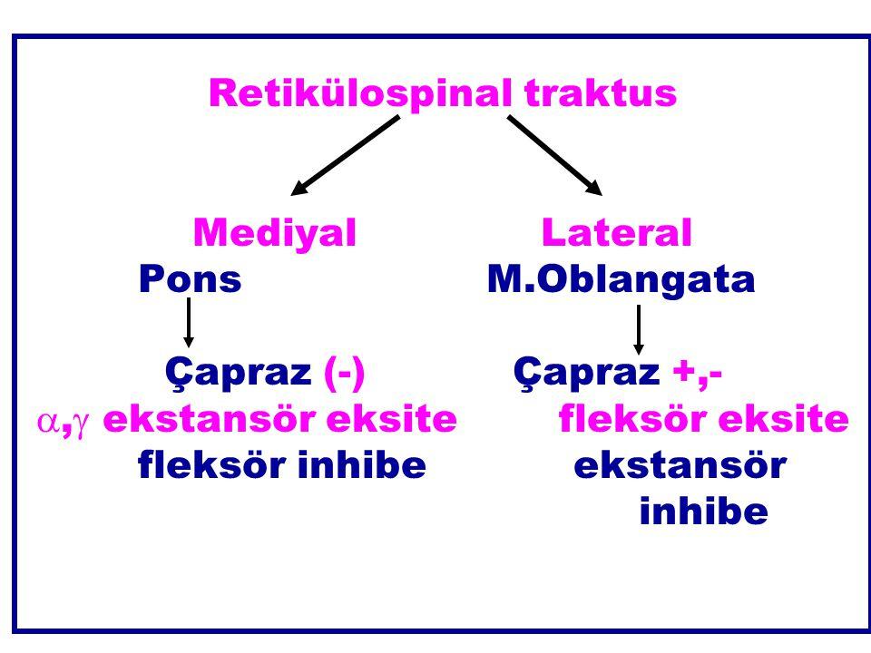 Retikülospinal traktus MediyalLateral PonsM.Oblangata Çapraz (-)Çapraz +,- ,  ekstansör eksitefleksör eksite fleksör inhibeekstansör inhibe