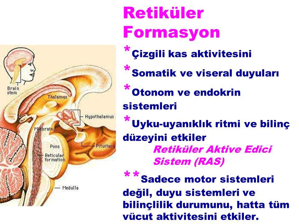 Retiküler Formasyon * Çizgili kas aktivitesini * Somatik ve viseral duyuları * Otonom ve endokrin sistemleri * Uyku-uyanıklık ritmi ve bilinç düzeyini etkiler Retiküler Aktive Edici Sistem (RAS) ** Sadece motor sistemleri değil, duyu sistemleri ve bilinçlilik durumunu, hatta tüm vücut aktivitesini etkiler.