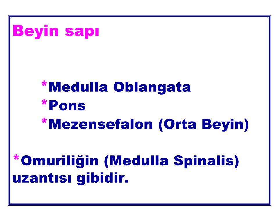 Beyin sapı * Medulla Oblangata * Pons * Mezensefalon (Orta Beyin) * Omuriliğin (Medulla Spinalis) uzantısı gibidir.