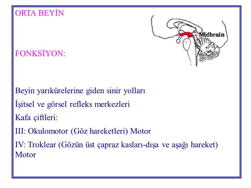 ORTA BEYİN FONKSİYON: Beyin yarıkürelerine giden sinir yolları İşitsel ve görsel refleks merkezleri Kafa çiftleri: III: Okulomotor (Göz hareketleri) Motor IV: Troklear (Gözün üst çapraz kasları-dışa ve aşağı hareket) Motor