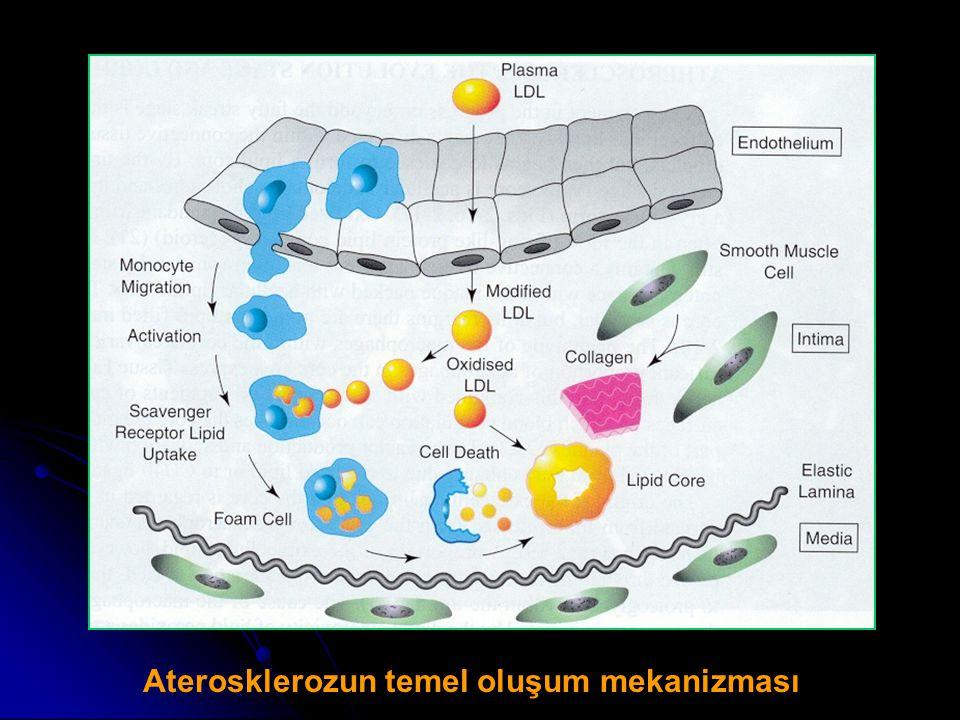 Aterosklerozun temel oluşum mekanizması