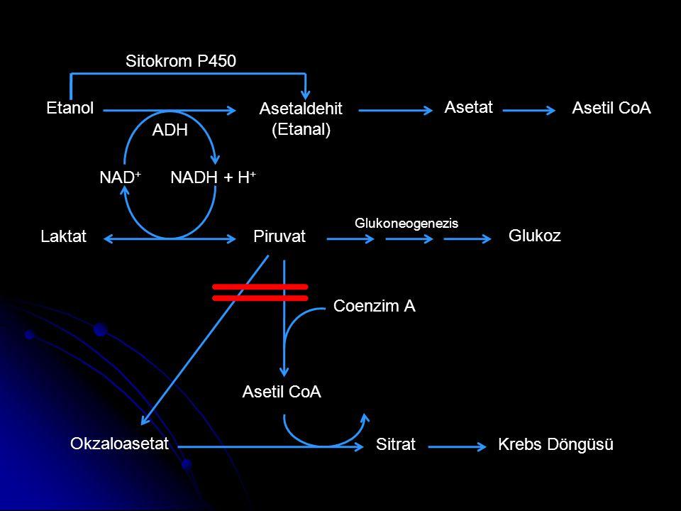 Etanol Asetaldehit (Etanal) Asetat Asetil CoA NADH + H + NAD + LaktatPiruvat Glukoz ADH Glukoneogenezis Coenzim A Asetil CoA Okzaloasetat SitratKrebs Döngüsü Sitokrom P450