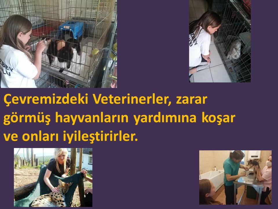 Ben de ileride hayvanlara duyarlı ve açık sahada da çalışabilecek bir veteriner olacağım.