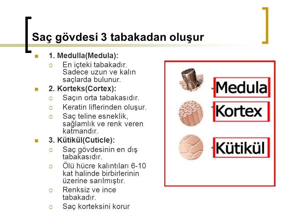 Saç gövdesi 3 tabakadan oluşur 1.Medulla(Medula):  En içteki tabakadır.