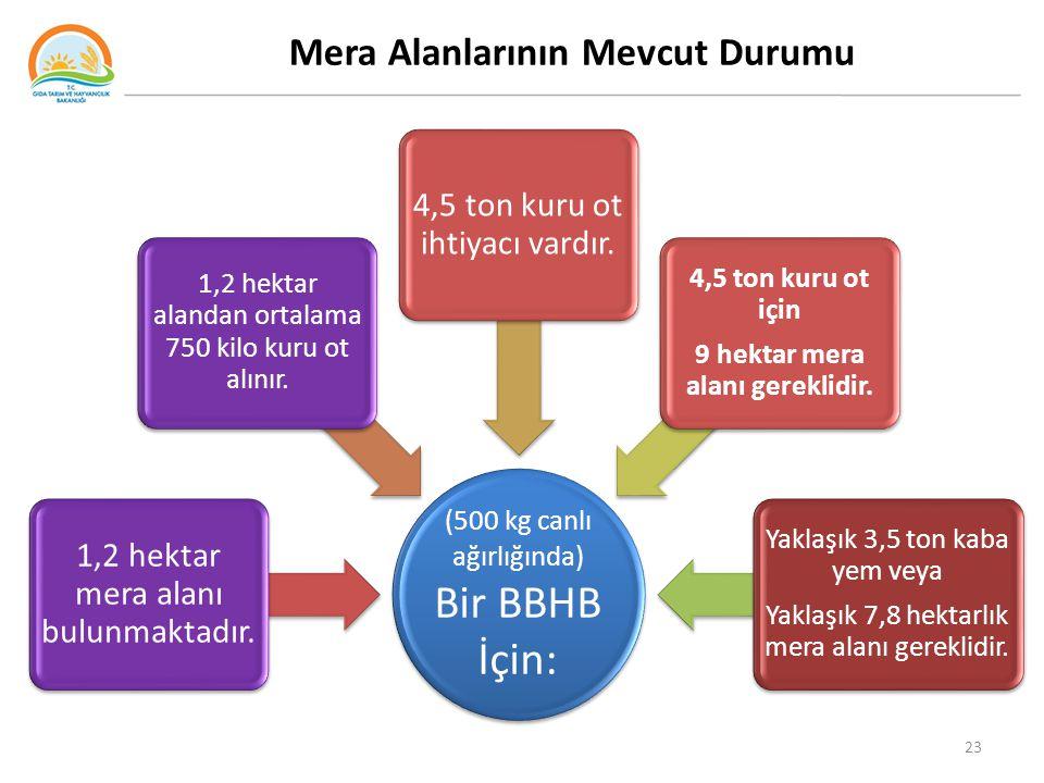 Mera Alanlarının Mevcut Durumu (500 kg canlı ağırlığında) Bir BBHB İçin: 1,2 hektar mera alanı bulunmaktadır. 1,2 hektar alandan ortalama 750 kilo kur