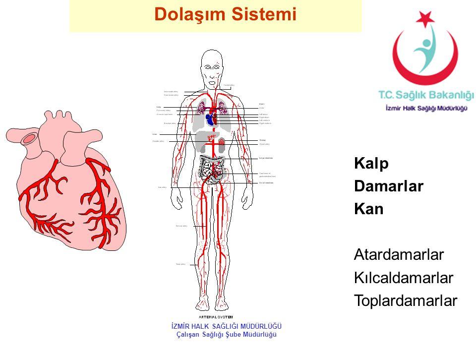 Dolaşım Sistemi Kalp Damarlar Kan Atardamarlar Kılcaldamarlar Toplardamarlar İZMİR HALK SAĞLIĞI MÜDÜRLÜĞÜ Çalışan Sağlığı Şube Müdürlüğü
