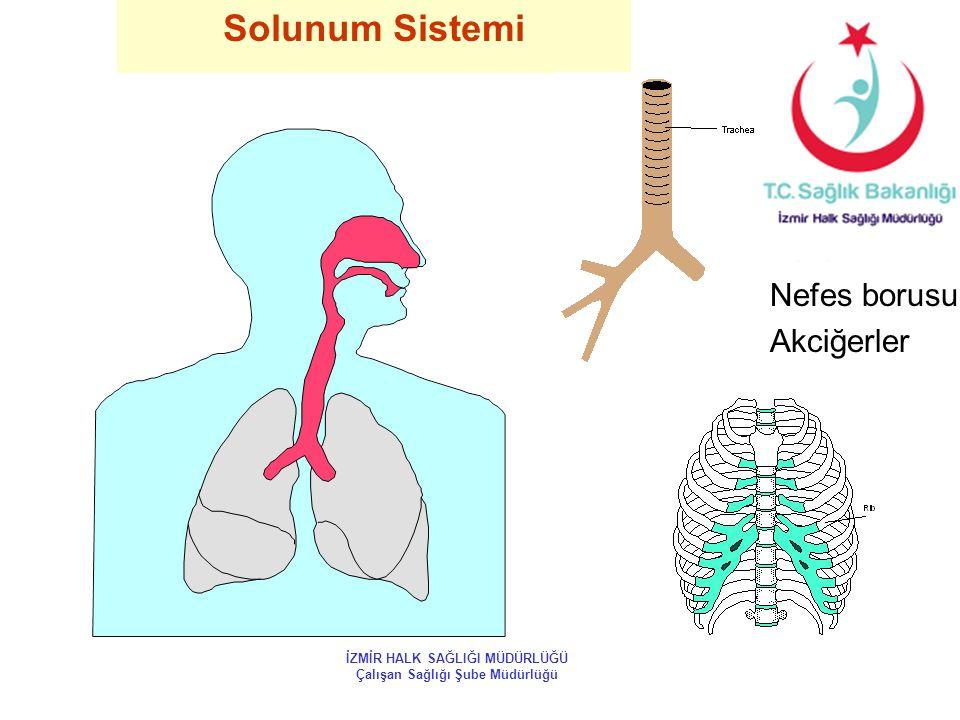 Solunum Sistemi Burun Nefes borusu Akciğerler İZMİR HALK SAĞLIĞI MÜDÜRLÜĞÜ Çalışan Sağlığı Şube Müdürlüğü