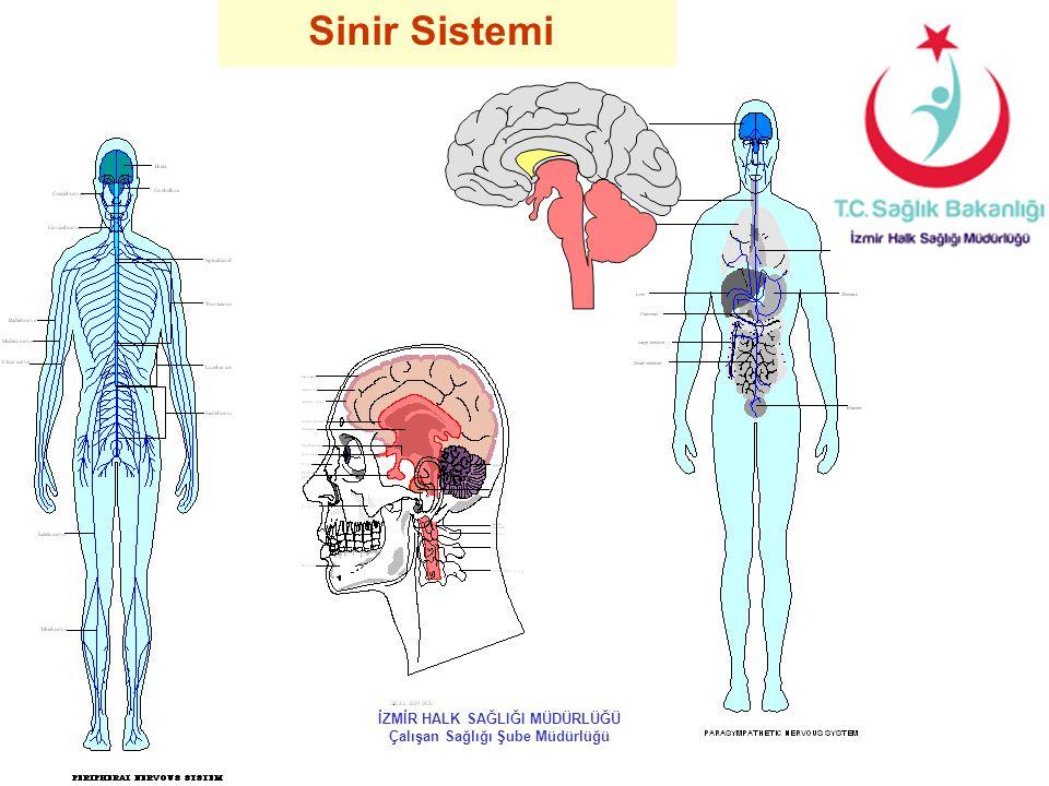 Sinir Sistemi İZMİR HALK SAĞLIĞI MÜDÜRLÜĞÜ Çalışan Sağlığı Şube Müdürlüğü