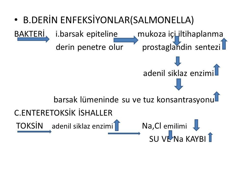 B.DERİN ENFEKSİYONLAR(SALMONELLA) BAKTERİ i.barsak epiteline mukoza içi iltihaplanma derin penetre olur prostaglandin sentezi adenil siklaz enzimi bar