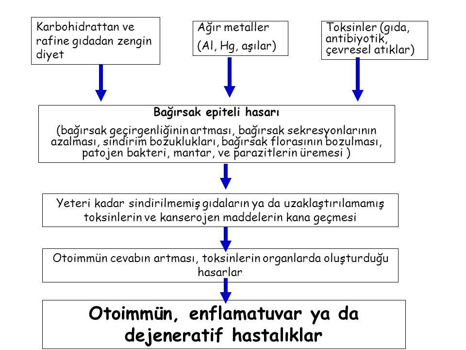 Karbohidrattan ve rafine gıdadan zengin diyet Ağır metaller (Al, Hg, aşılar) Toksinler (gıda, antibiyotik, çevresel atıklar) Bağırsak epiteli hasarı (bağırsak geçirgenliğinin artması, bağırsak sekresyonlarının azalması, sindirim bozuklukları, bağırsak florasının bozulması, patojen bakteri, mantar, ve parazitlerin üremesi ) Yeteri kadar sindirilmemiş gıdaların ya da uzaklaştırılamamış toksinlerin ve kanserojen maddelerin kana geçmesi Otoimmün cevabın artması, toksinlerin organlarda oluşturduğu hasarlar Otoimmün, enflamatuvar ya da dejeneratif hastalıklar