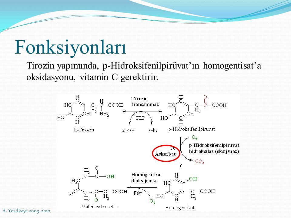 Fonksiyonları Tirozin yapımında, p-Hidroksifenilpirüvat'ın homogentisat'a oksidasyonu, vitamin C gerektirir. A. Yeşilkaya 2009-2010