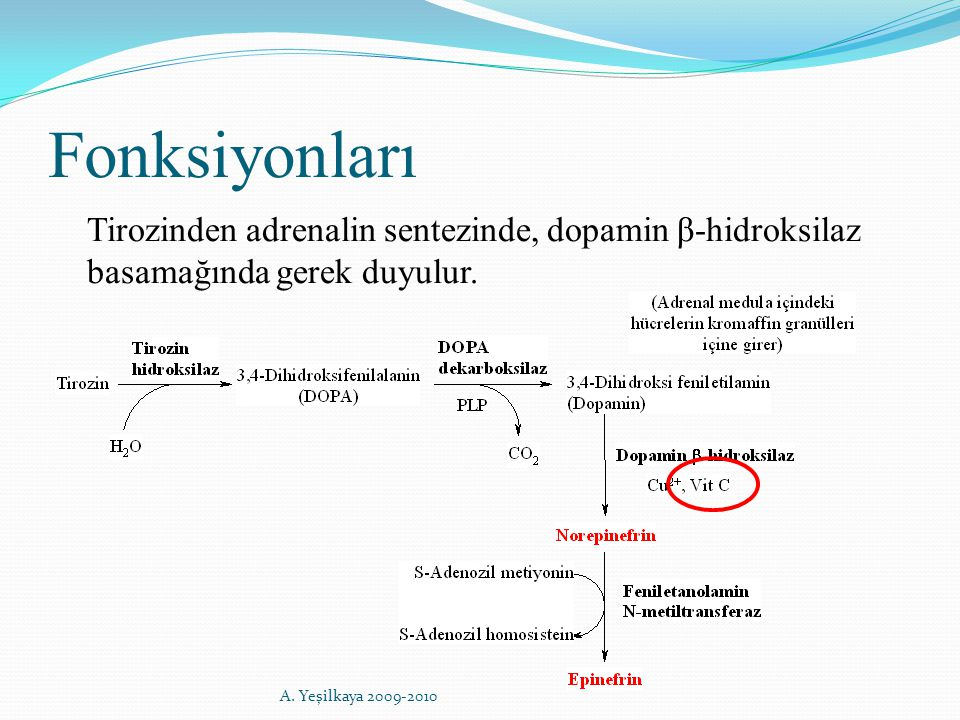 Fonksiyonları Tirozinden adrenalin sentezinde, dopamin β-hidroksilaz basamağında gerek duyulur. A. Yeşilkaya 2009-2010