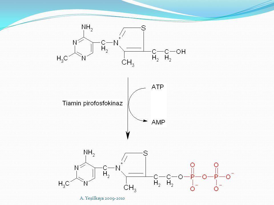 Fonksiyonları 1) Piruvat dehidrogenaz : Piruvat dekarboksilaz, dihidrolipoil transasetilaz, dihidrolipoil dehidrogenaz   Ketoglutarat dehidrogenaz 3) Asetoasetat sentetaz 4) Transketolaz - transaldolaz A.