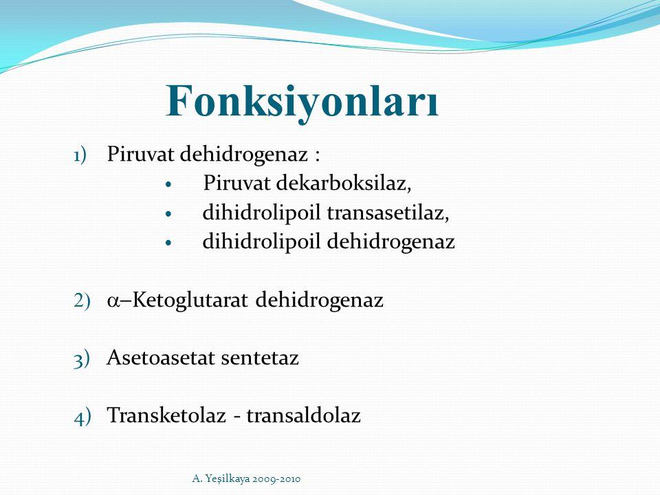 Fonksiyonları 1) Piruvat dehidrogenaz : Piruvat dekarboksilaz, dihidrolipoil transasetilaz, dihidrolipoil dehidrogenaz   Ketoglutarat dehidrogenaz