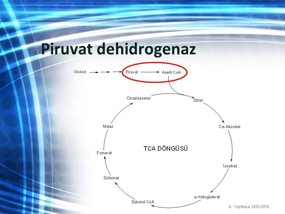 Piruvat dehidrogenaz A. Yeşilkaya 2009-2010