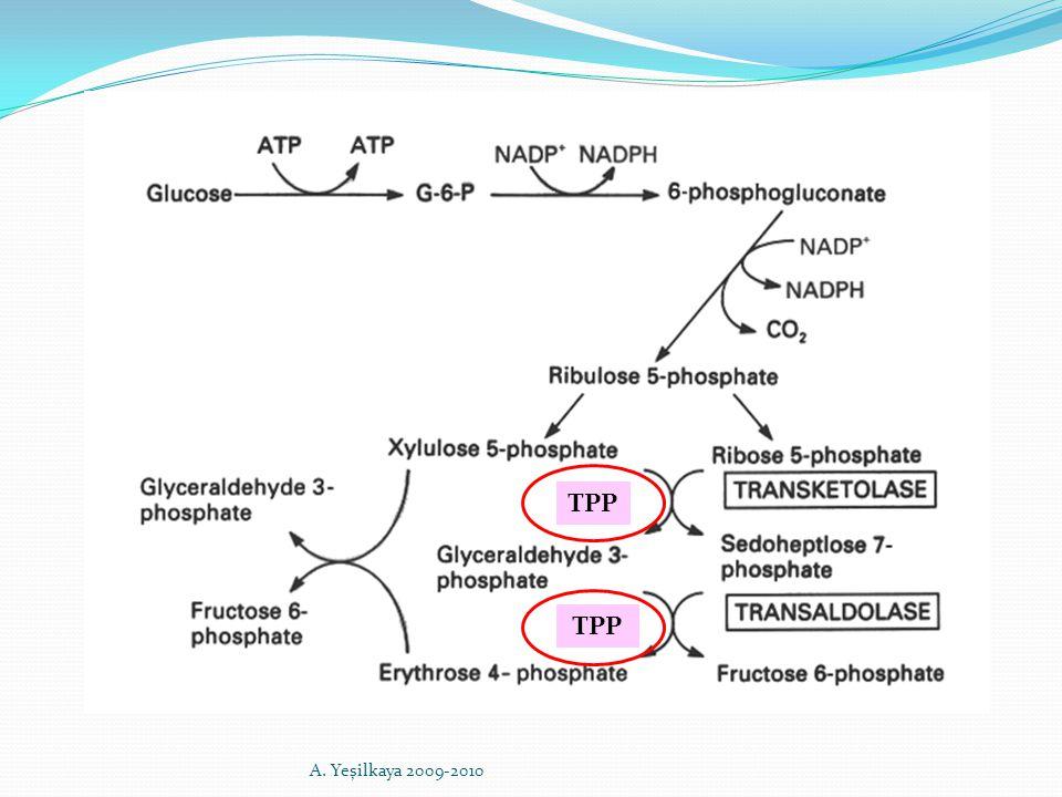TPP A. Yeşilkaya 2009-2010
