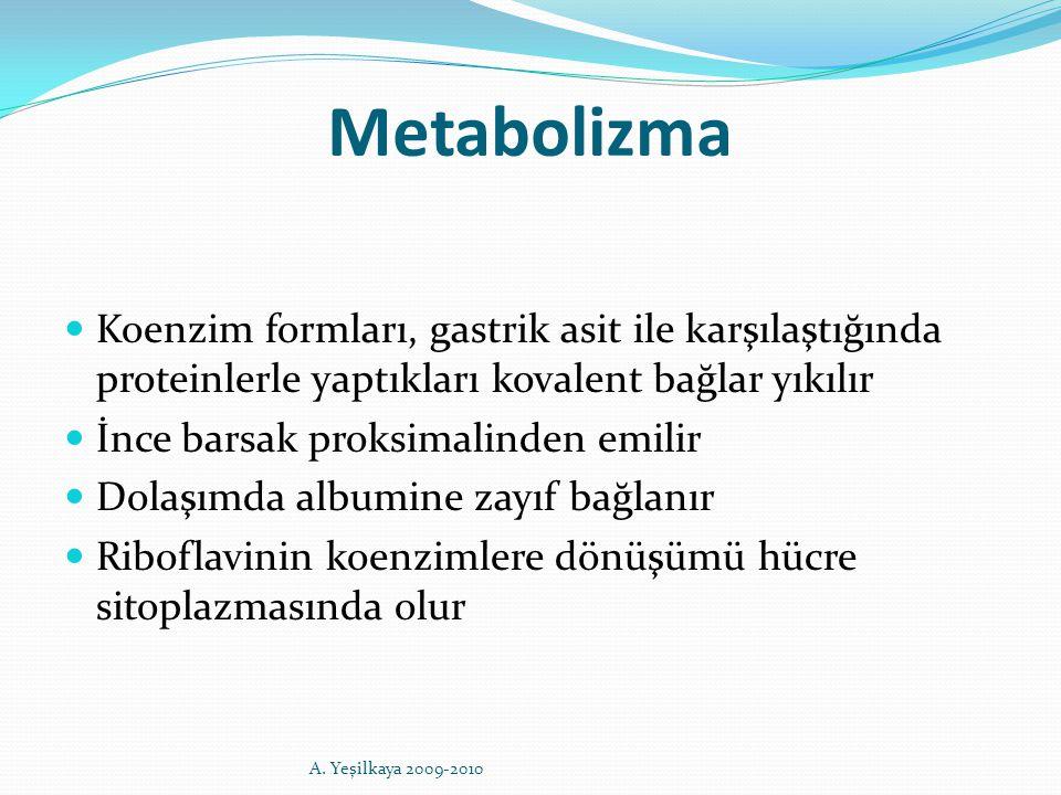 Metabolizma Koenzim formları, gastrik asit ile karşılaştığında proteinlerle yaptıkları kovalent bağlar yıkılır İnce barsak proksimalinden emilir Dolaş